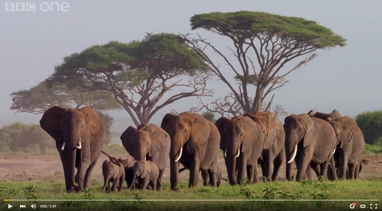 Ελέφαντες βρίσκουν το σκελετό ενός προγόνου (βίντεο)
