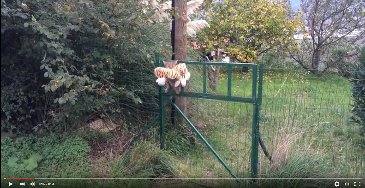 Η γάτα μου πήγε στους γείτονες να δανειστεί ένα τίγρη