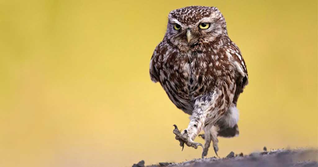 20 φωτογραφίες για τις οποίες οι κουκουβάγιες μπορούν να είναι υπερήφανες
