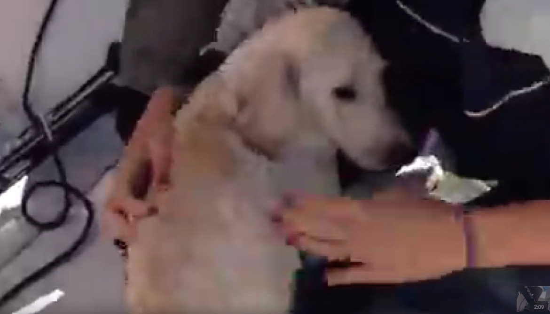 Ιταλοί ιστιοπλόοι διασώζουν σκυλί στο νερό