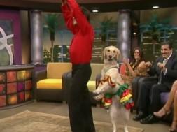 Σκύλος χορεύει μαρένγκα