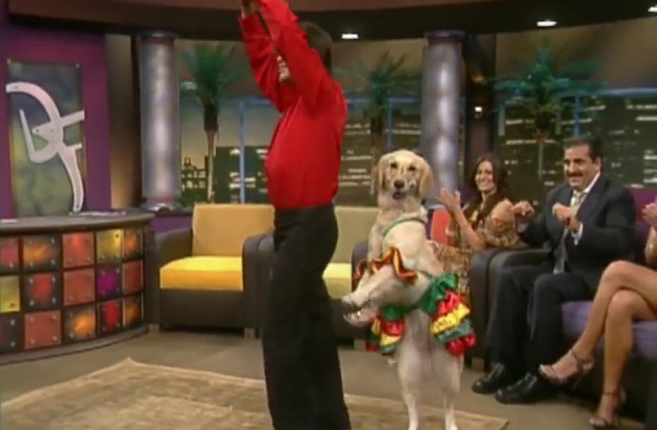 Σκύλος χορεύει μαρένγκα καταπληκτικά