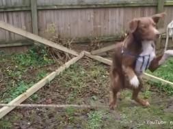Σκύλος ακροβάτης ισορροπιστής