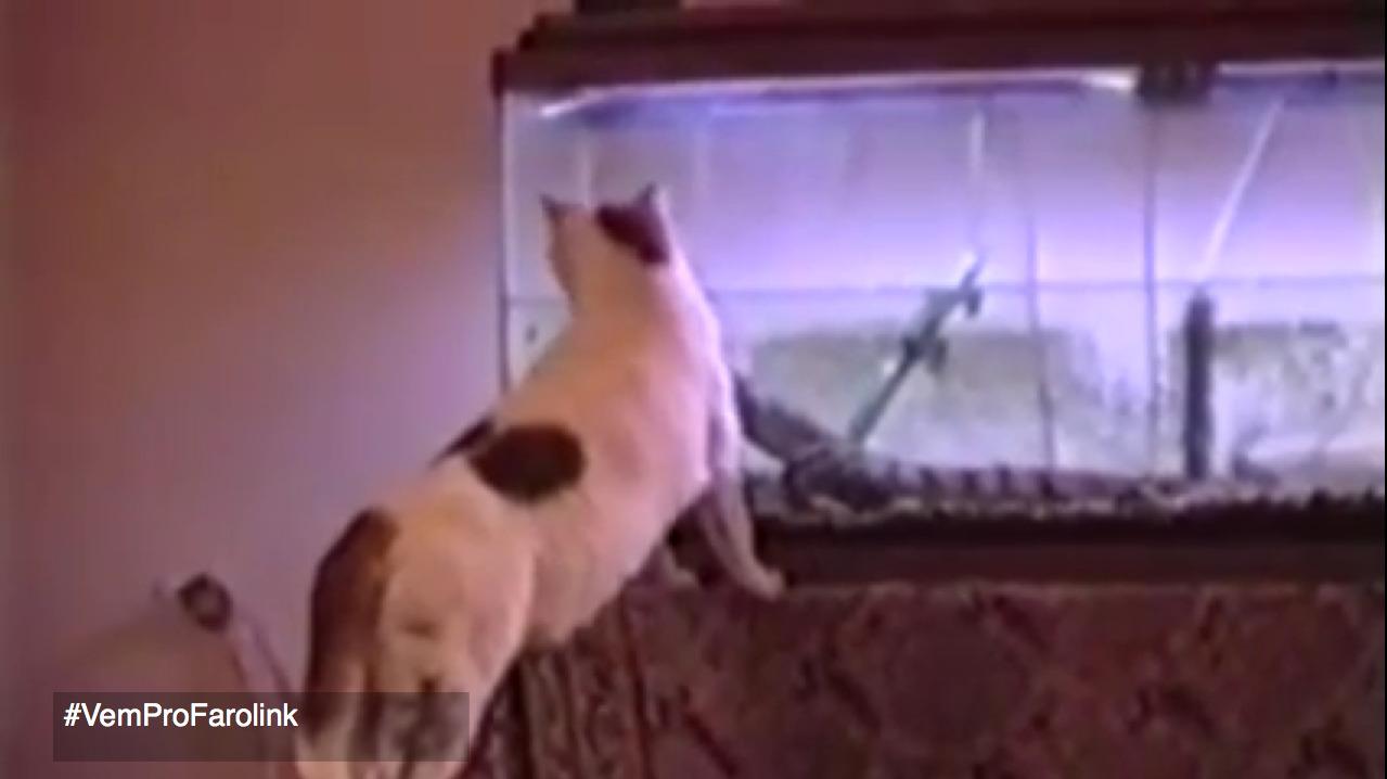 Γατοξεσπάσματα με γάτες σε κατάσταση υστερίας