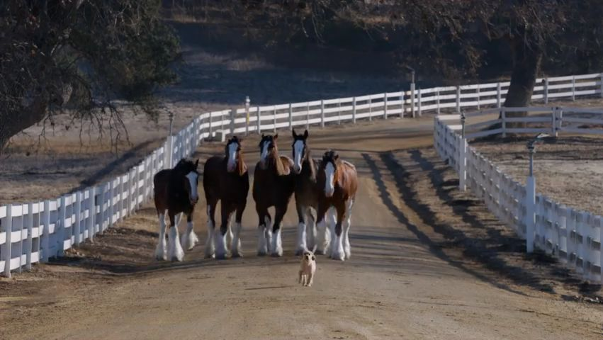 Το άλογο και το κουτάβι