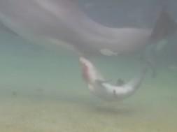 Γέννηση δελφινιού στη Χαβάη