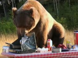Ο καλύτερος φίλος μου… μια αρκούδα