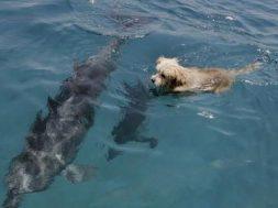 Σκύλος και δελφίνι