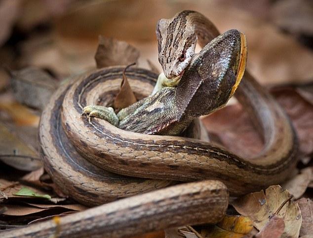 Έπεσε στο… λάκο με τα φίδια