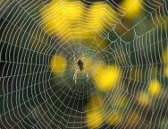 Αράχνη υφαίνει τον ιστό της
